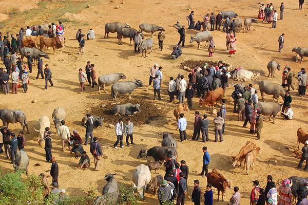 Người dân khắp các bản làng đổ về khu chợ để giao dịch trâu