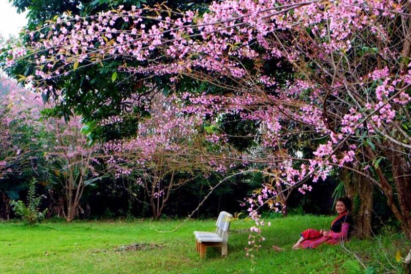 Du lịch mùa xuân