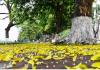 Khám phá những điểm du lịch mùa thu đẹp ở Việt Nam