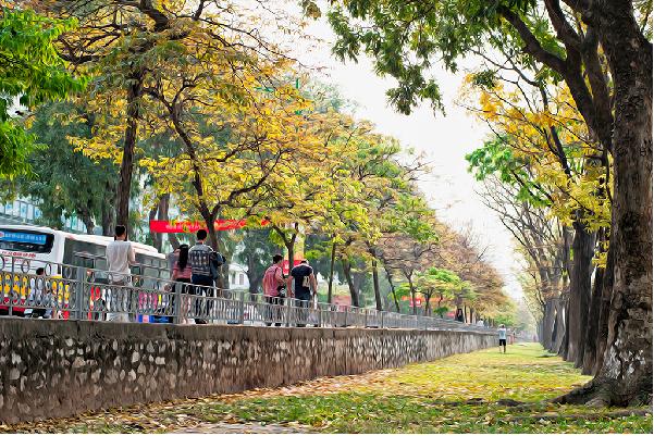 Đường Kim Mã cung đường đẹp mỗi khi thu về