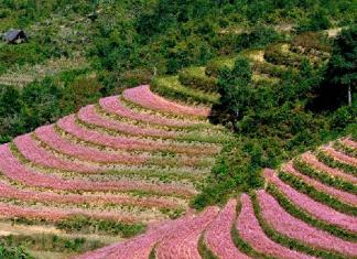 Khung cảnh mùa xuân trên cao nguyên Hà Giang
