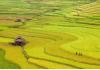 Du lịch khám phá Bản LÌm Mông mù cang chải