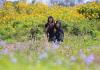 Ngắm trọn vẹn mùa hoa dã quỳ Đà Lạt những ngày đầu đông