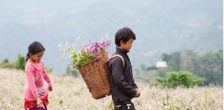 Ngắm hoa tam giác mạch ở Mộc Châu mùa nào đẹp nhất?