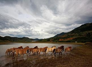 Trải nghiệm cưỡi ngựa trên đỉnh langbiang Đà Lạt