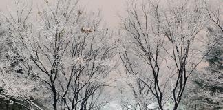 Cảnh đẹp Hàn quốc vào mùa đông