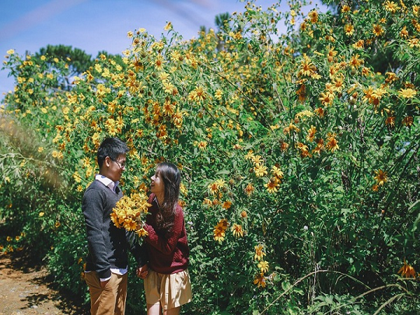 Phượt vườn quốc gia ba vì tháng 11 ngắm trọn vẻ đẹp hoa dã quỳ