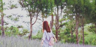 Khám phá cánh đồng hoa oải hương Đà Lạt
