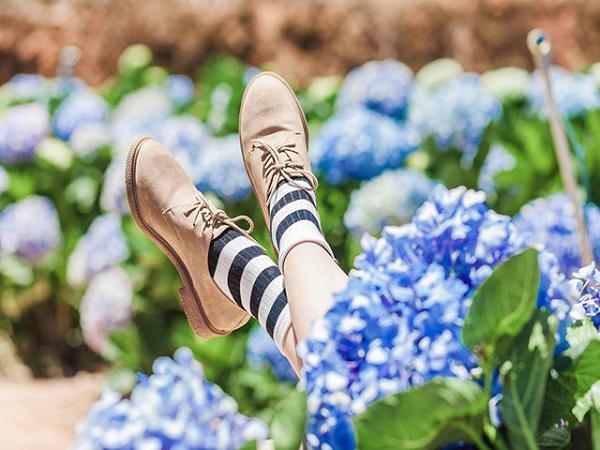 Vườn hoa cẩm tú cầu Đà lạt - điểm đến thu hút du khách