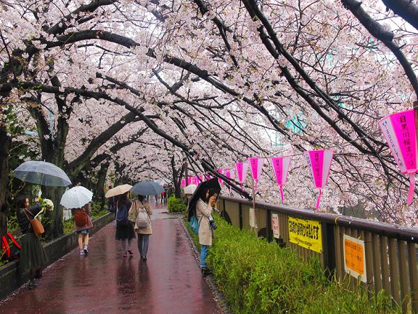 Du lịch Nhật Bản mùa xuân, điểm du xuân lý tưởng 2019