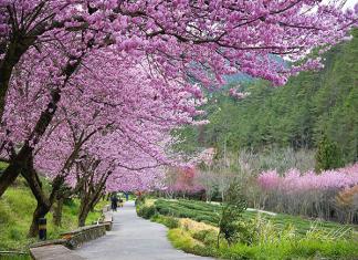 Du lịch Nhật Bản mùa xuân 2019