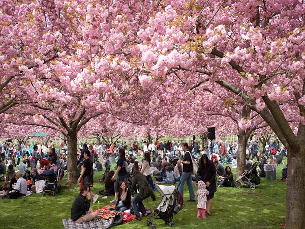 Đến Nhật Bản ngắm hoa anh đào, điểm đến lý tưởng 2019