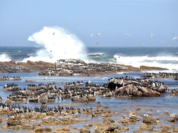 Mũi Hảo Vọng - mũi đất cuối có khung cảnh tuyệt đẹp